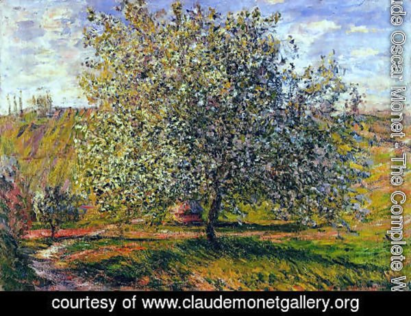 Claude Oscar Monet - Tree in Flower near Vetheuil