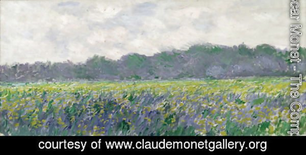 Claude Oscar Monet - Field of Yellow Irises at Giverny