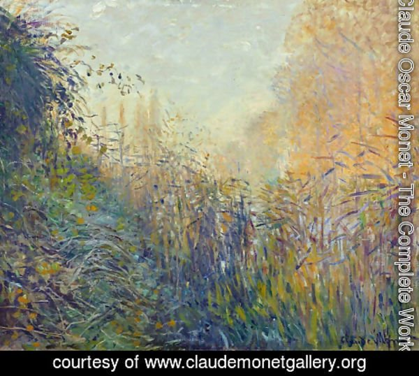 Claude Oscar Monet - Study Rushes at Argenteuil