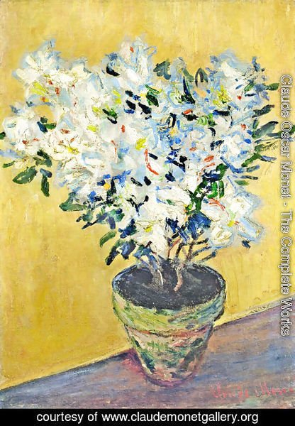Claude Oscar Monet - White Azaleas in a Pot 2