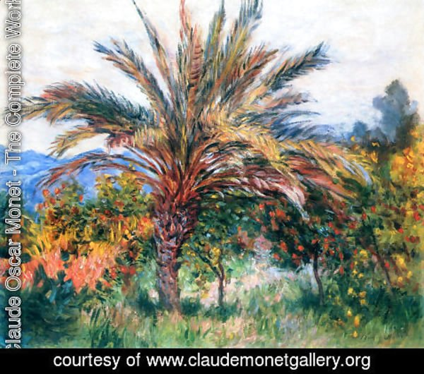 Claude Oscar Monet - A Palm Tree At Bordighera
