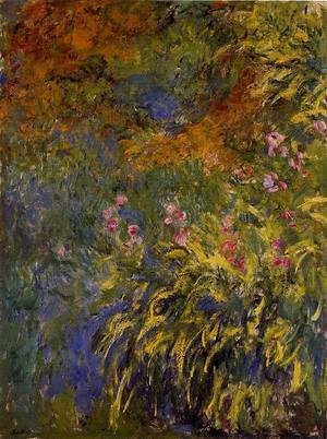 Claude Oscar Monet - Irises