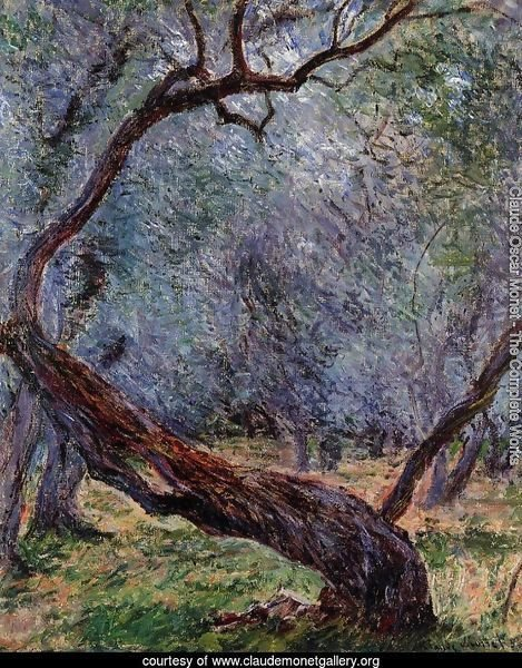 Study Of Olive Trees