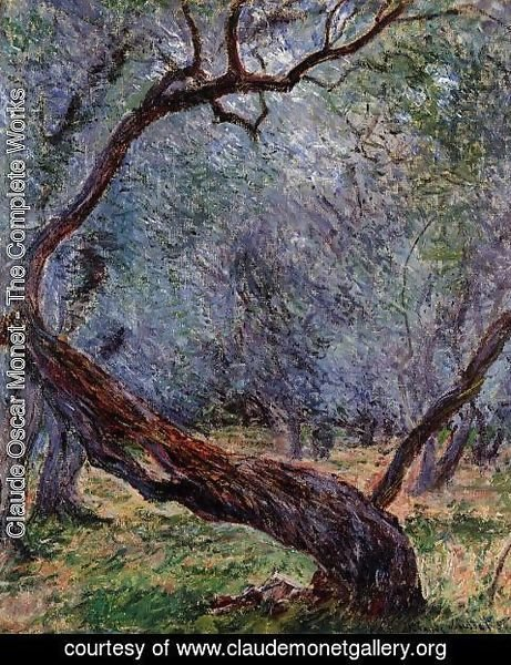 Claude Oscar Monet - Study Of Olive Trees