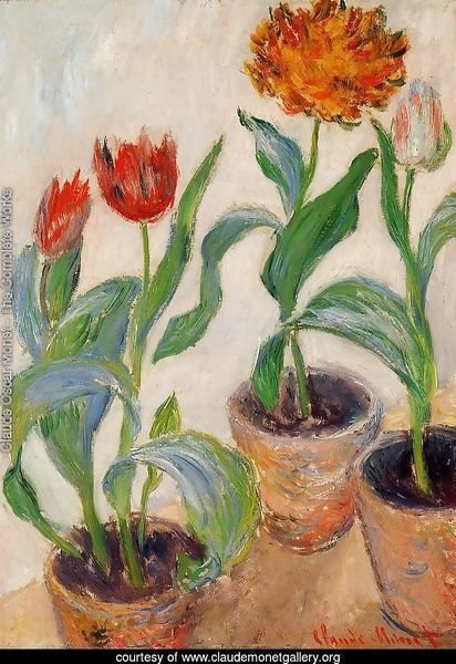 Three Pots Of Tulips