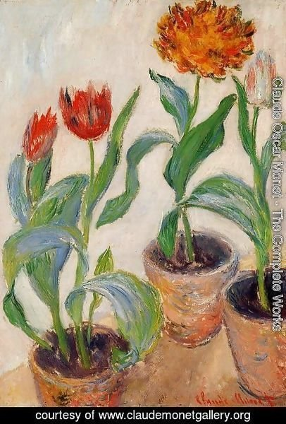 Claude Oscar Monet - Three Pots Of Tulips