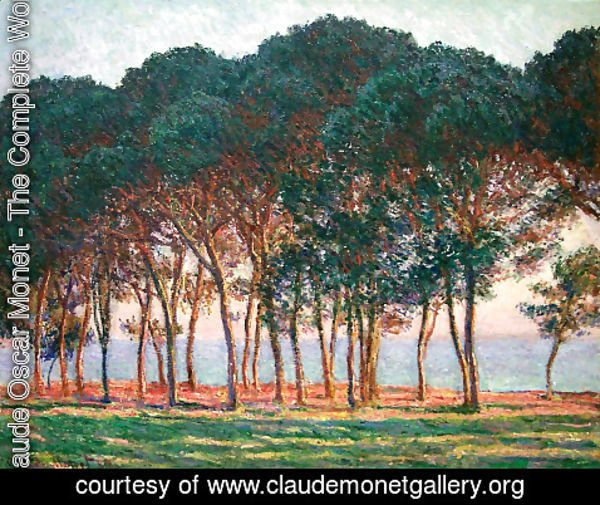 Claude Oscar Monet - Under The Pine Trees At The End Of The Day